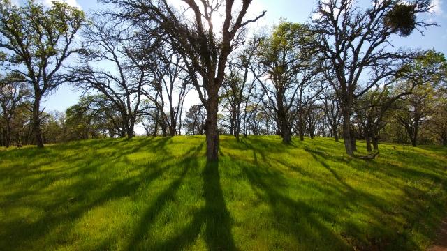 beautiful-filtered-light-through-oak-trees_33124879594_o.jpg