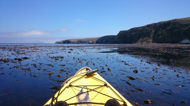 kelp-beds_40306820060_o