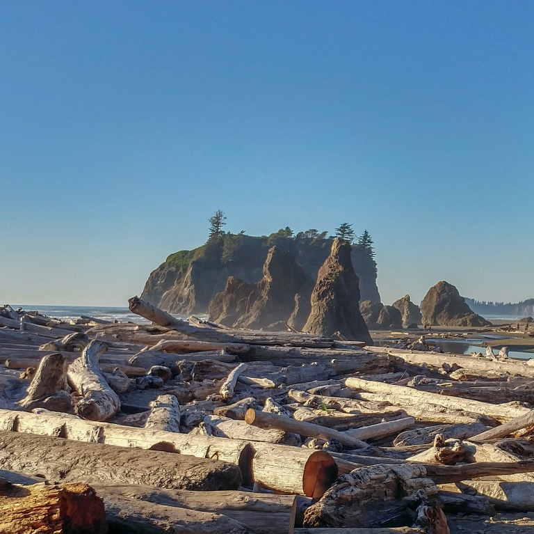 driftwood-forest_44197974625_o